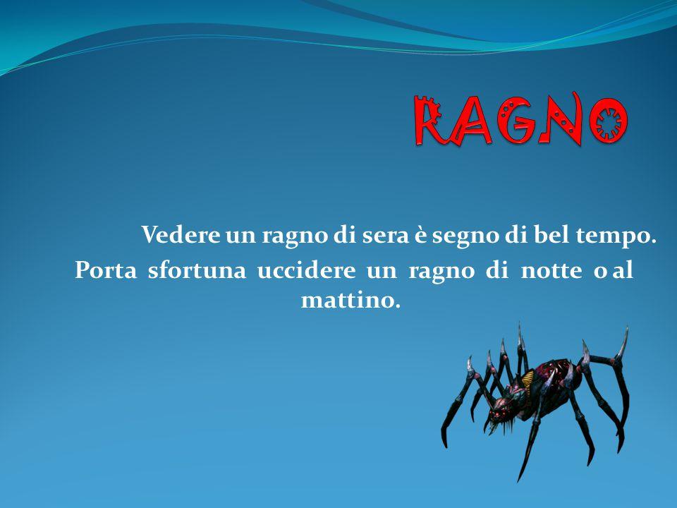 Vedere un ragno di sera è segno di bel tempo. Porta sfortuna uccidere un ragno di notte o al mattino.