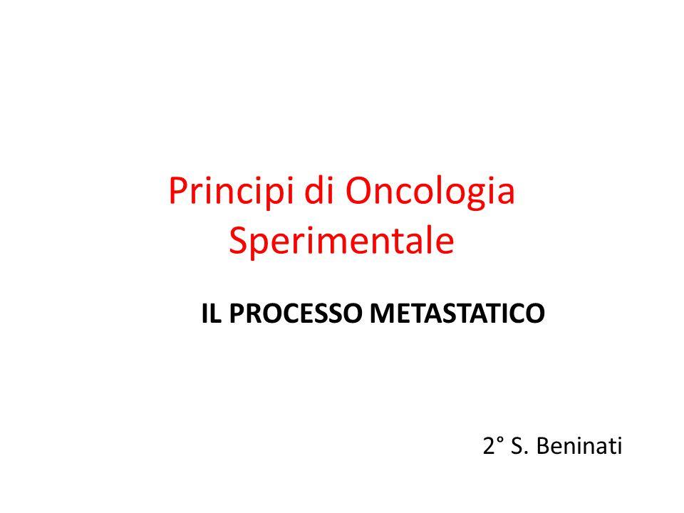 Principi di Oncologia Sperimentale IL PROCESSO METASTATICO 2° S. Beninati