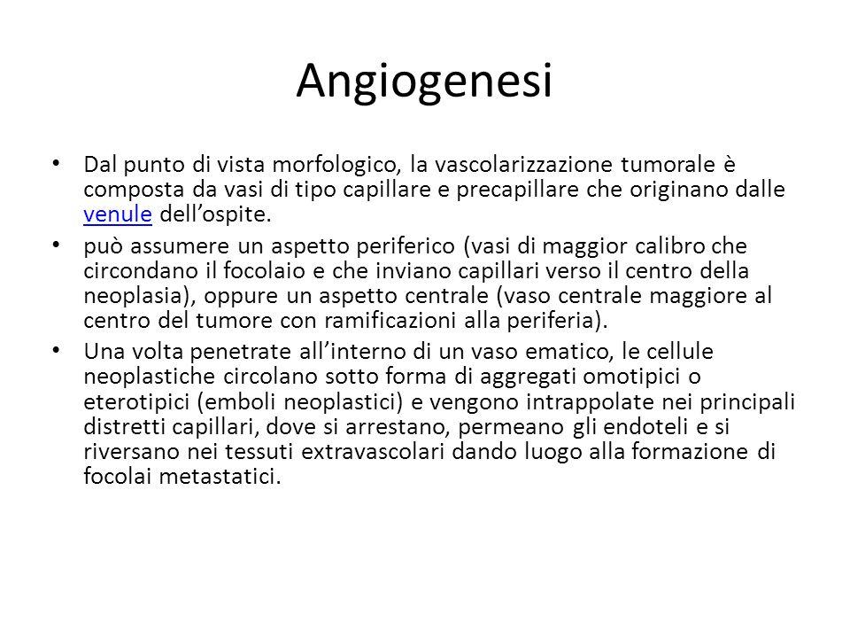 Angiogenesi Dal punto di vista morfologico, la vascolarizzazione tumorale è composta da vasi di tipo capillare e precapillare che originano dalle venule dell'ospite.