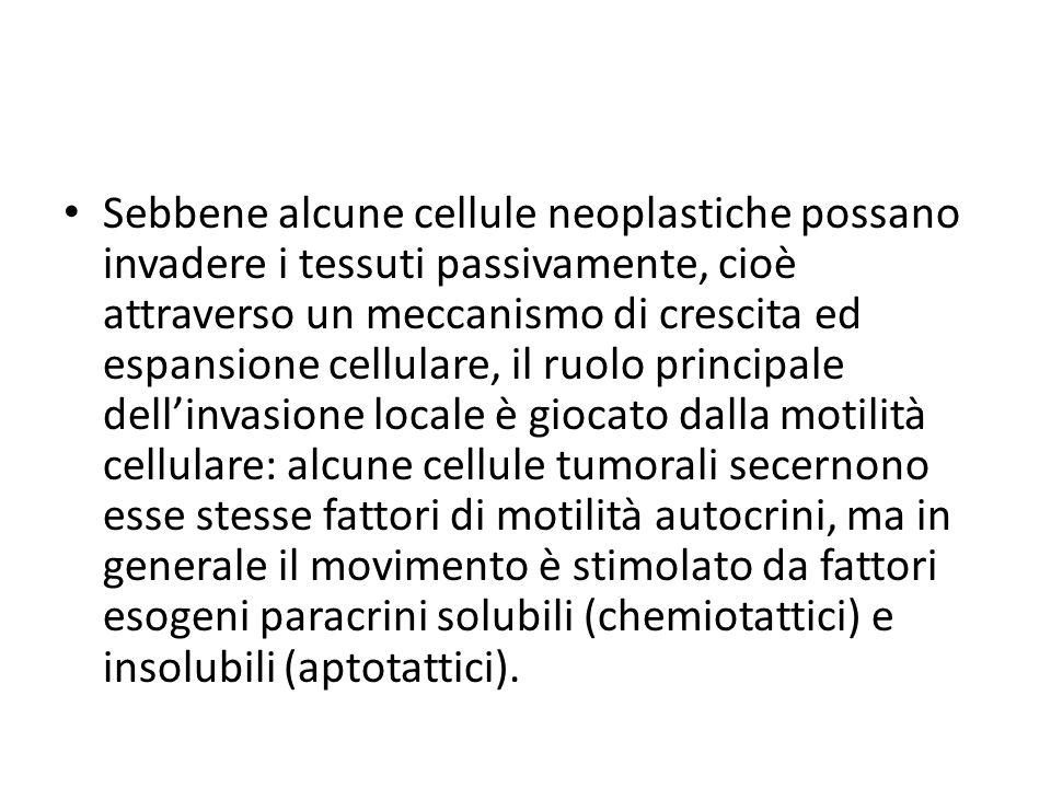 Sebbene alcune cellule neoplastiche possano invadere i tessuti passivamente, cioè attraverso un meccanismo di crescita ed espansione cellulare, il ruolo principale dell'invasione locale è giocato dalla motilità cellulare: alcune cellule tumorali secernono esse stesse fattori di motilità autocrini, ma in generale il movimento è stimolato da fattori esogeni paracrini solubili (chemiotattici) e insolubili (aptotattici).