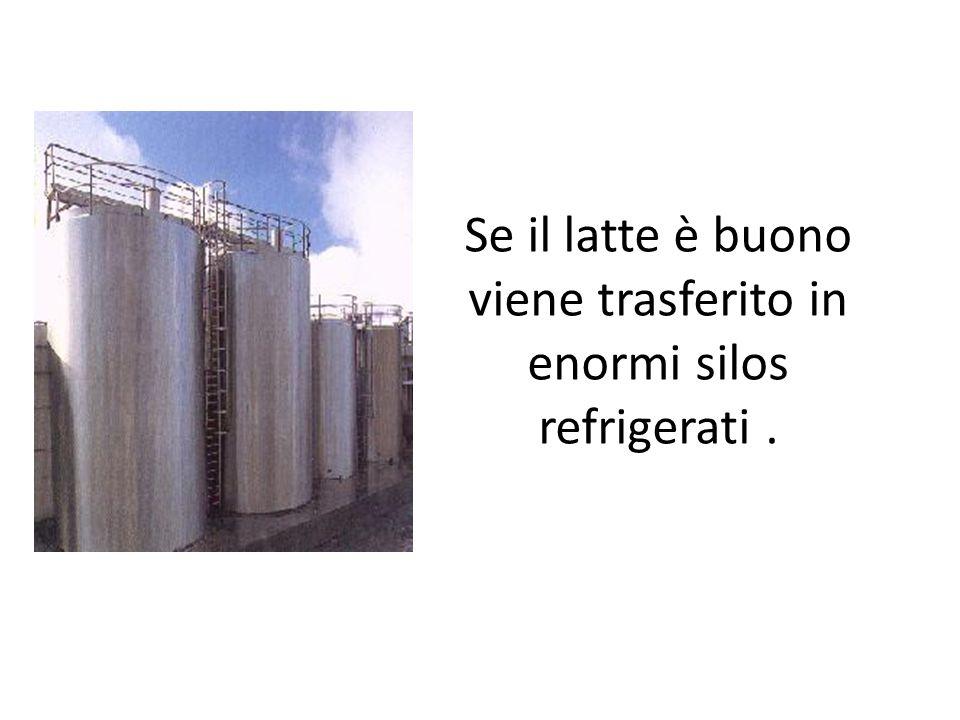 Se il latte è buono viene trasferito in enormi silos refrigerati.