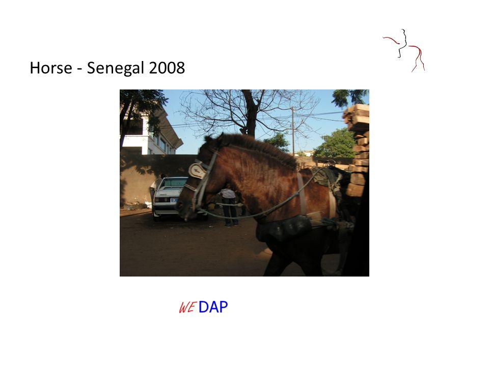 Horse - Senegal 2008