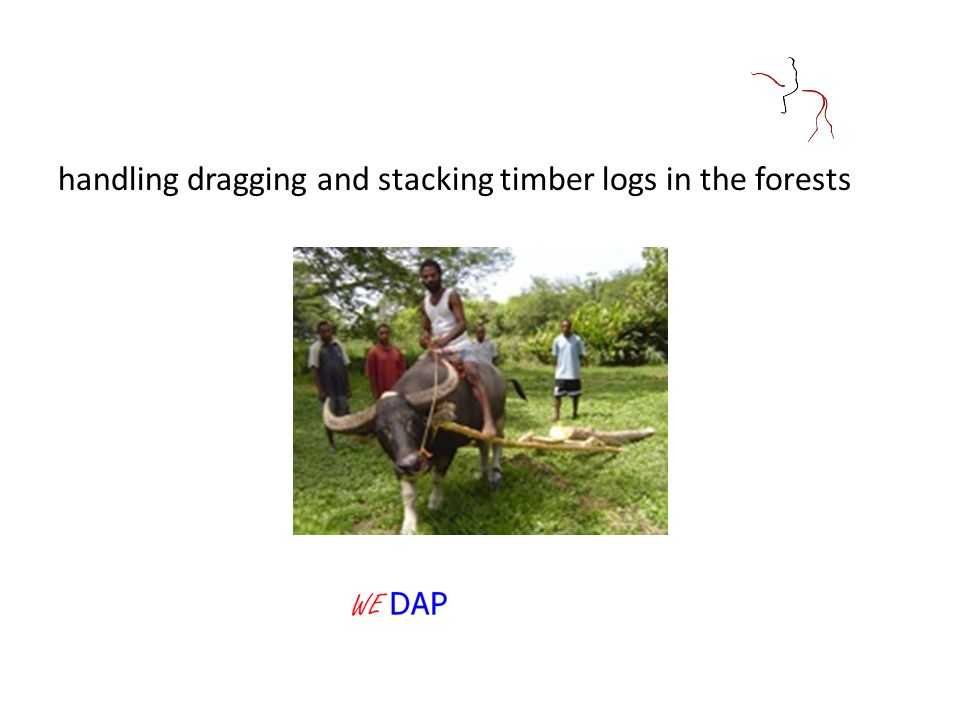 handling dragging and stacking timber logs in the forests