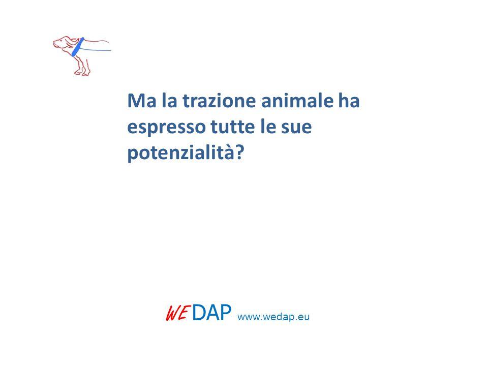 WE DAP www.wedap.eu Ma la trazione animale ha espresso tutte le sue potenzialità?