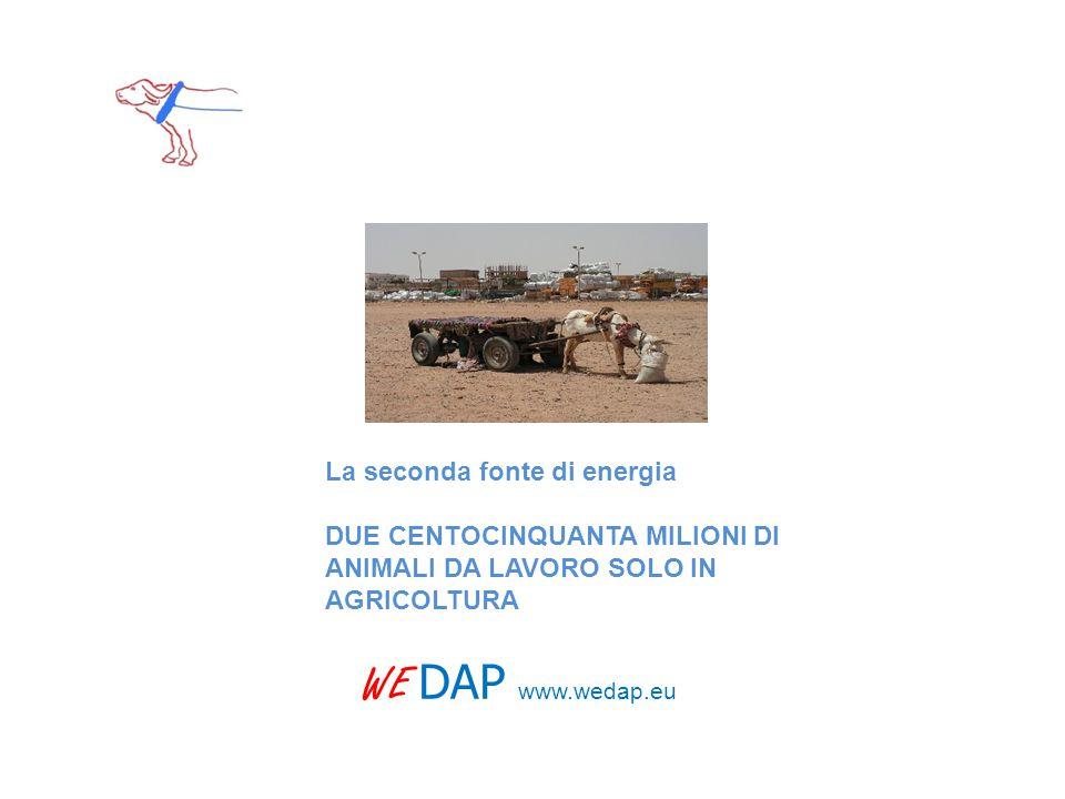 WE DAP www.wedap.eu La seconda fonte di energia DUE CENTOCINQUANTA MILIONI DI ANIMALI DA LAVORO SOLO IN AGRICOLTURA
