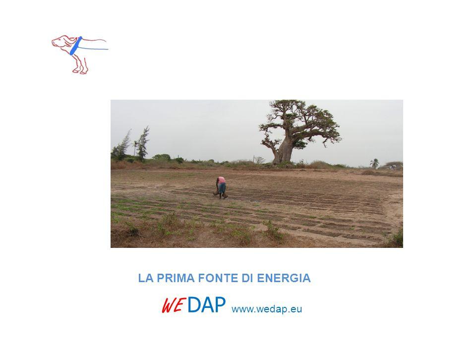 WE DAP www.wedap.eu LA PRIMA FONTE DI ENERGIA