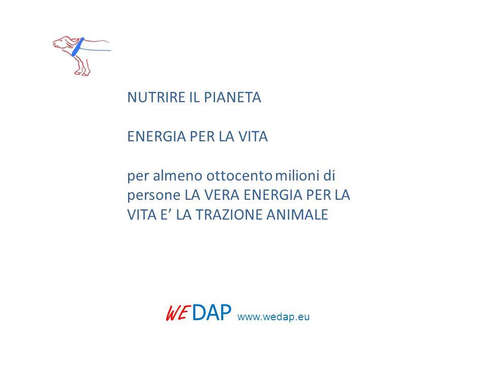 WE DAP www.wedap.eu NUTRIRE IL PIANETA ENERGIA PER LA VITA per almeno ottocento milioni di persone LA VERA ENERGIA PER LA VITA E' LA TRAZIONE ANIMALE