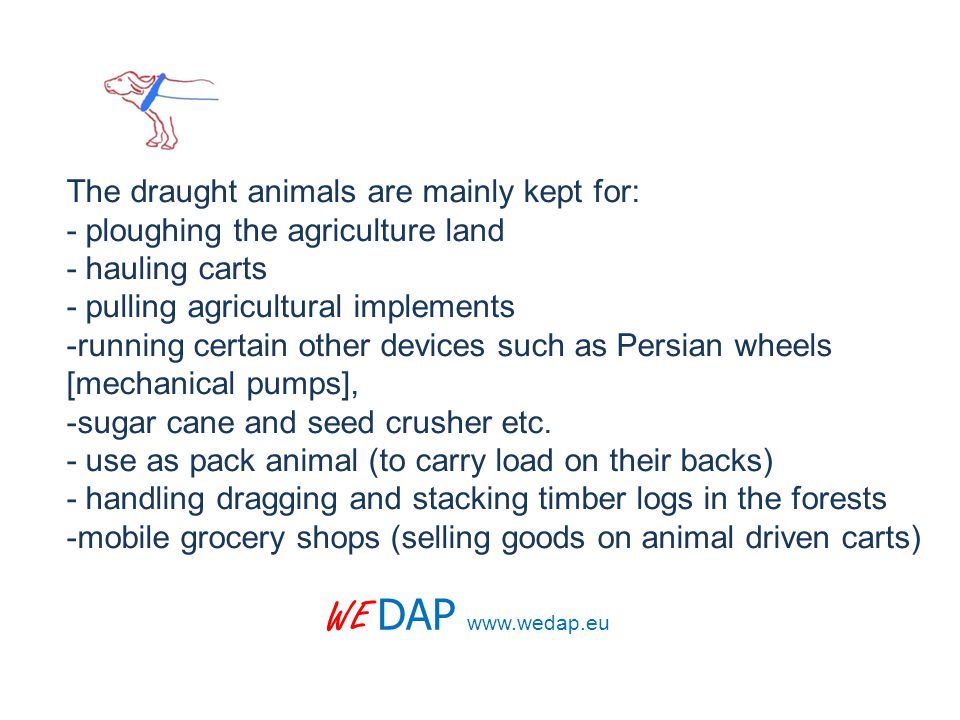 WE DAP www.wedap.eu The draught animals are mainly kept for: - ploughing the agriculture land - hauling carts - pulling agricultural implements -running certain other devices such as Persian wheels [mechanical pumps], -sugar cane and seed crusher etc.