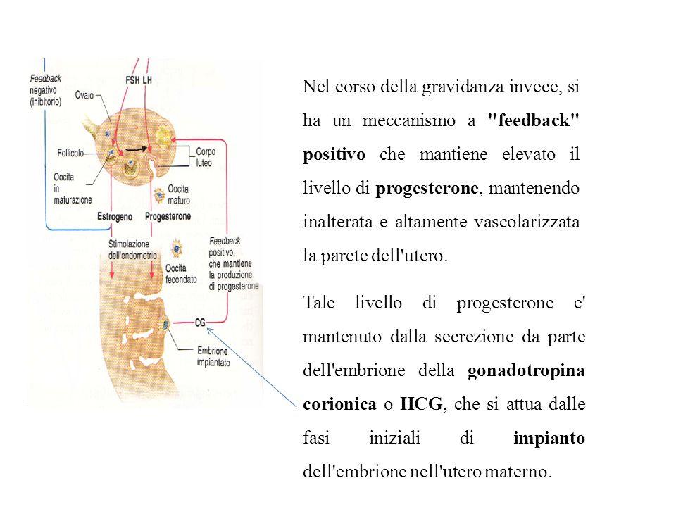Nel corso della gravidanza invece, si ha un meccanismo a feedback positivo che mantiene elevato il livello di progesterone, mantenendo inalterata e altamente vascolarizzata la parete dell utero.