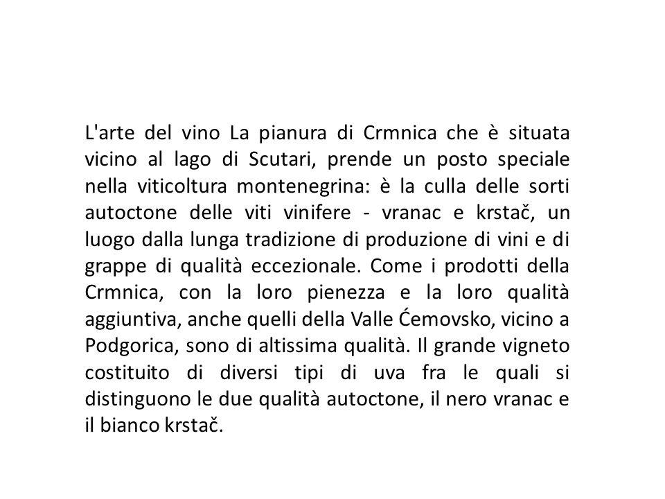 L'arte del vino La pianura di Crmnica che è situata vicino al lago di Scutari, prende un posto speciale nella viticoltura montenegrina: è la culla del