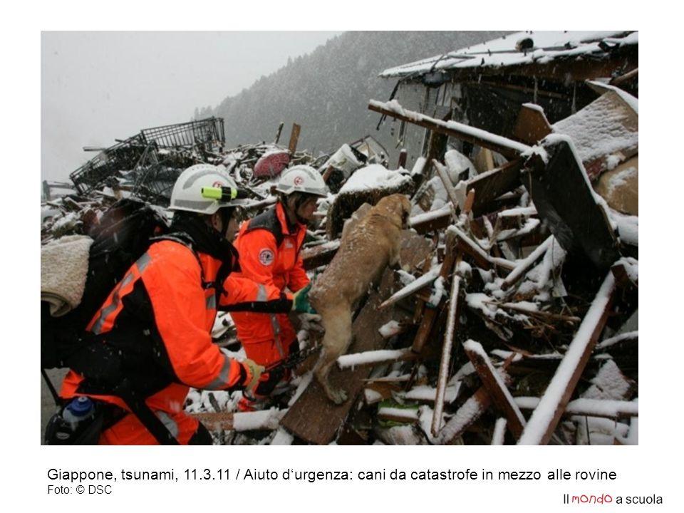 Giappone, tsunami, 11.3.11 / Aiuto d'urgenza: cani da catastrofe in mezzo alle rovine Foto: © DSC