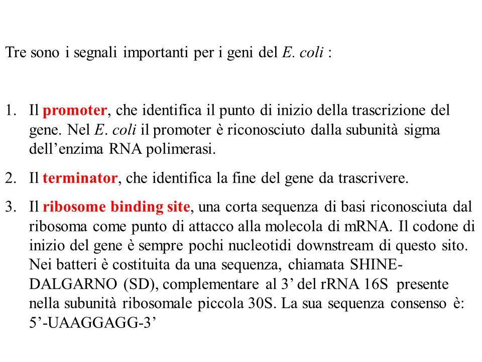Tre sono i segnali importanti per i geni del E.