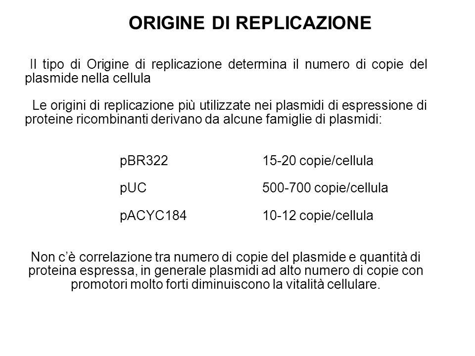 ORIGINE DI REPLICAZIONE ● Il tipo di Origine di replicazione determina il numero di copie del plasmide nella cellula ● Le origini di replicazione più utilizzate nei plasmidi di espressione di proteine ricombinanti derivano da alcune famiglie di plasmidi: pBR32215-20 copie/cellula pUC500-700 copie/cellula pACYC18410-12 copie/cellula Non c'è correlazione tra numero di copie del plasmide e quantità di proteina espressa, in generale plasmidi ad alto numero di copie con promotori molto forti diminuiscono la vitalità cellulare.
