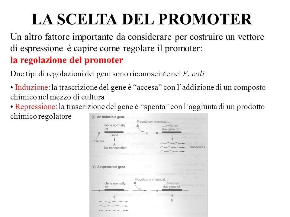 LA SCELTA DEL PROMOTER Un altro fattore importante da considerare per costruire un vettore di espressione è capire come regolare il promoter: la regolazione del promoter Due tipi di regolazioni dei geni sono riconosciute nel E.