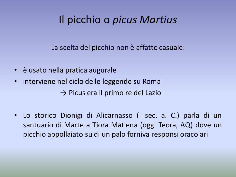 Il picchio o picus Martius La scelta del picchio non è affatto casuale: è usato nella pratica augurale interviene nel ciclo delle leggende su Roma → P