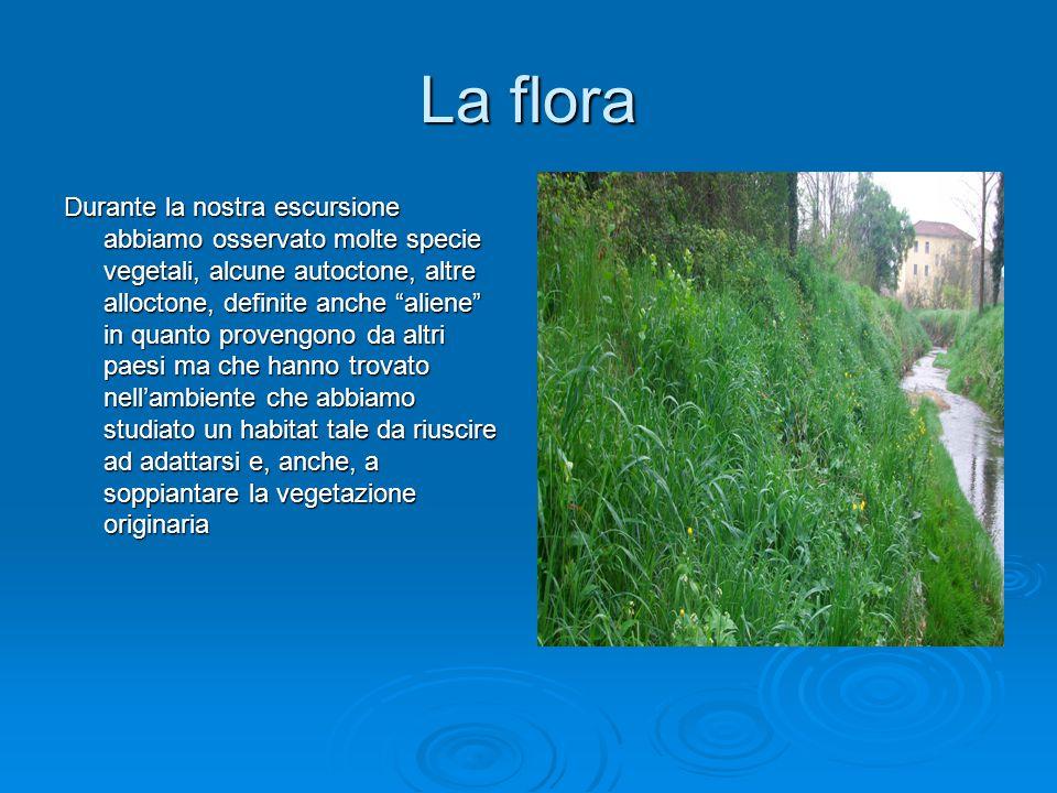 """La flora Durante la nostra escursione abbiamo osservato molte specie vegetali, alcune autoctone, altre alloctone, definite anche """"aliene"""" in quanto pr"""