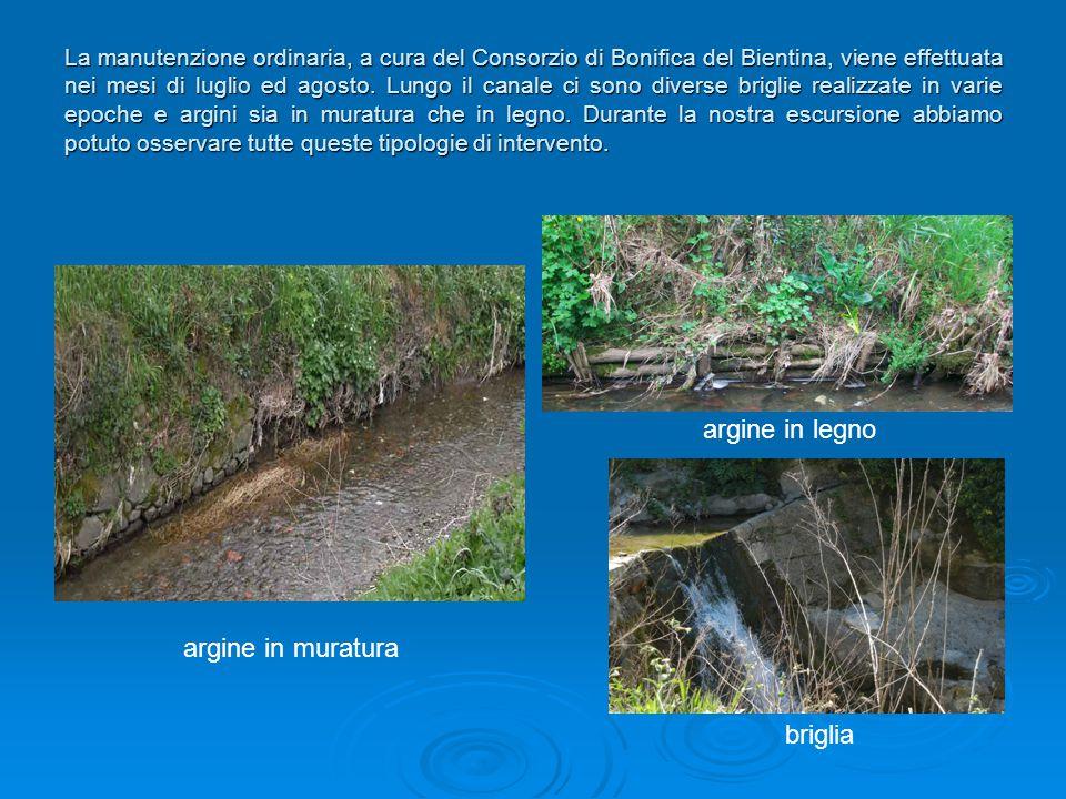 La manutenzione ordinaria, a cura del Consorzio di Bonifica del Bientina, viene effettuata nei mesi di luglio ed agosto. Lungo il canale ci sono diver