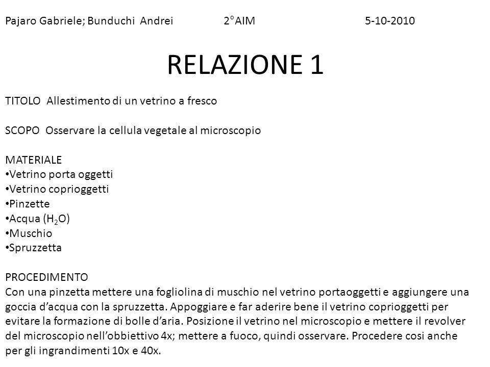 Pajaro Gabriele; Bunduchi Andrei 2°AIM 5-10-2010 RELAZIONE 1 TITOLO Allestimento di un vetrino a fresco SCOPO Osservare la cellula vegetale al microsc
