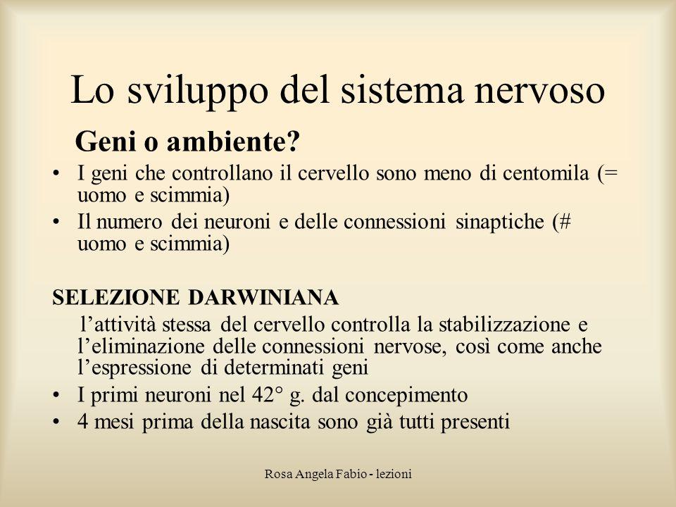 Rosa Angela Fabio - lezioni Lo sviluppo del sistema nervoso Geni o ambiente? I geni che controllano il cervello sono meno di centomila (= uomo e scimm