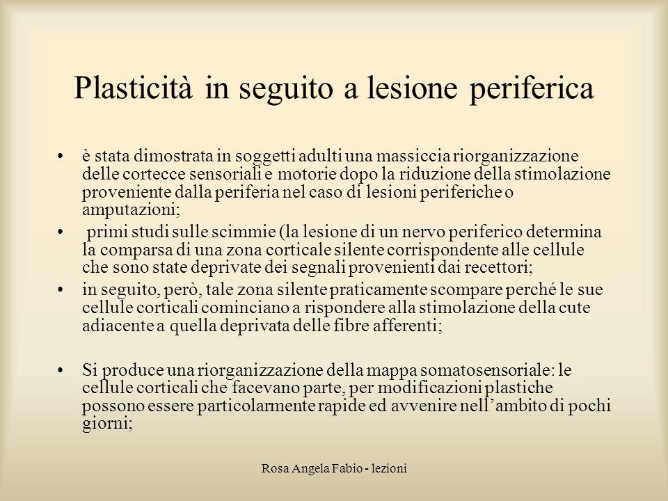 Rosa Angela Fabio - lezioni Plasticità in seguito a lesione periferica è stata dimostrata in soggetti adulti una massiccia riorganizzazione delle cort