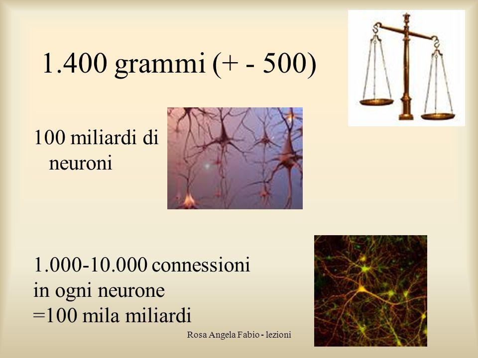 Rosa Angela Fabio - lezioni 1.400 grammi (+ - 500) 100 miliardi di neuroni 1.000-10.000 connessioni in ogni neurone =100 mila miliardi