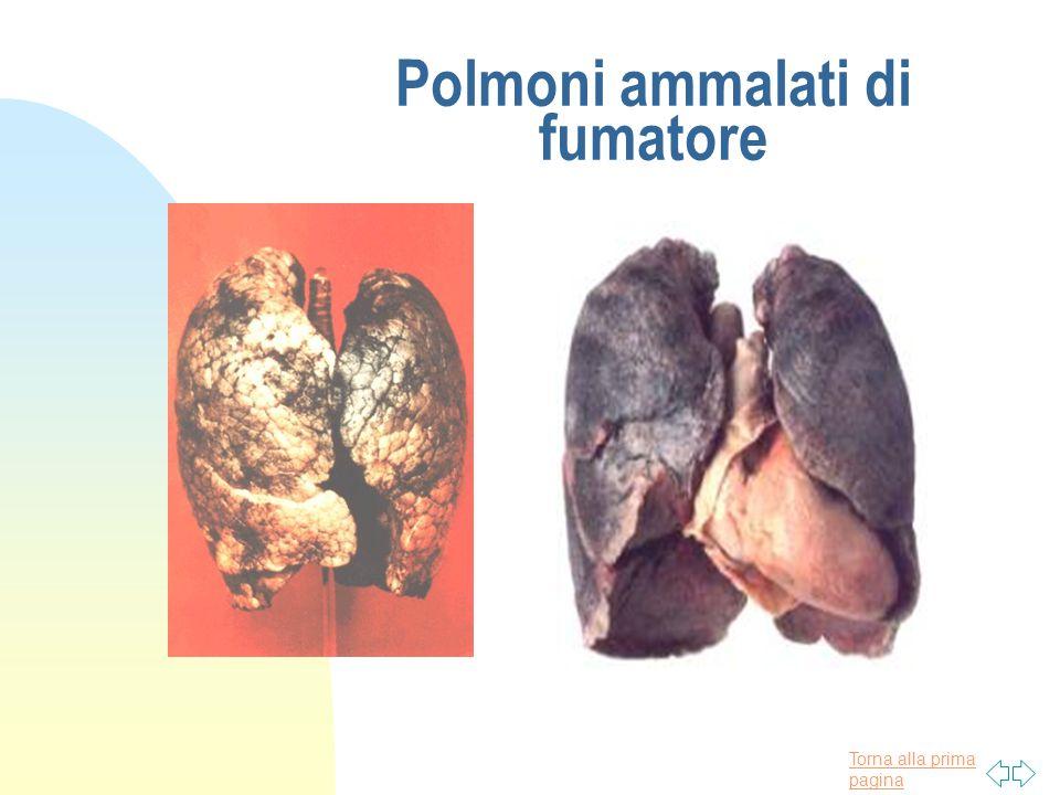 Torna alla prima pagina Polmoni sani di non fumatore