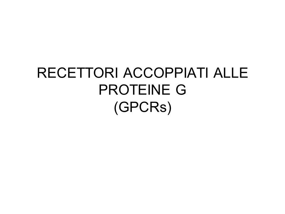 RECETTORI ACCOPPIATI ALLE PROTEINE G (GPCRs)