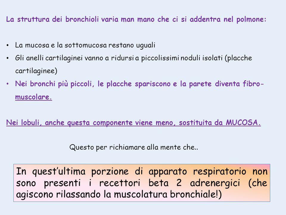 La struttura dei bronchioli varia man mano che ci si addentra nel polmone: La mucosa e la sottomucosa restano uguali Gli anelli cartilaginei vanno a r