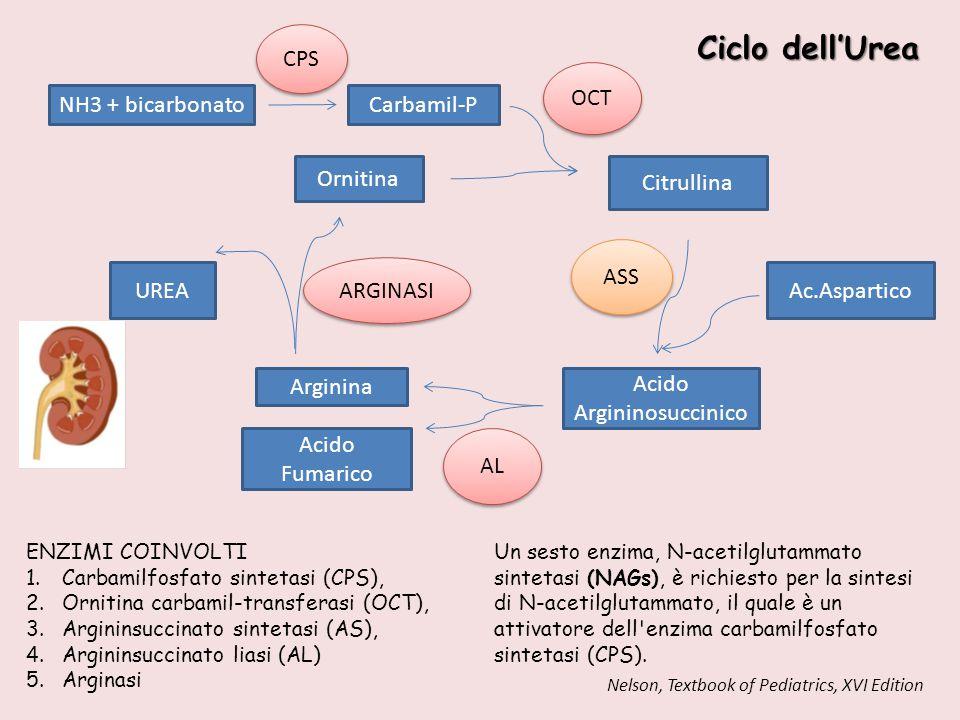 NH3 + bicarbonato Carbamil-P Ornitina CPS OCT Citrullina ASS Ac.Aspartico Acido Argininosuccinico AL Arginina Acido Fumarico UREA ARGINASI Ciclo dell'
