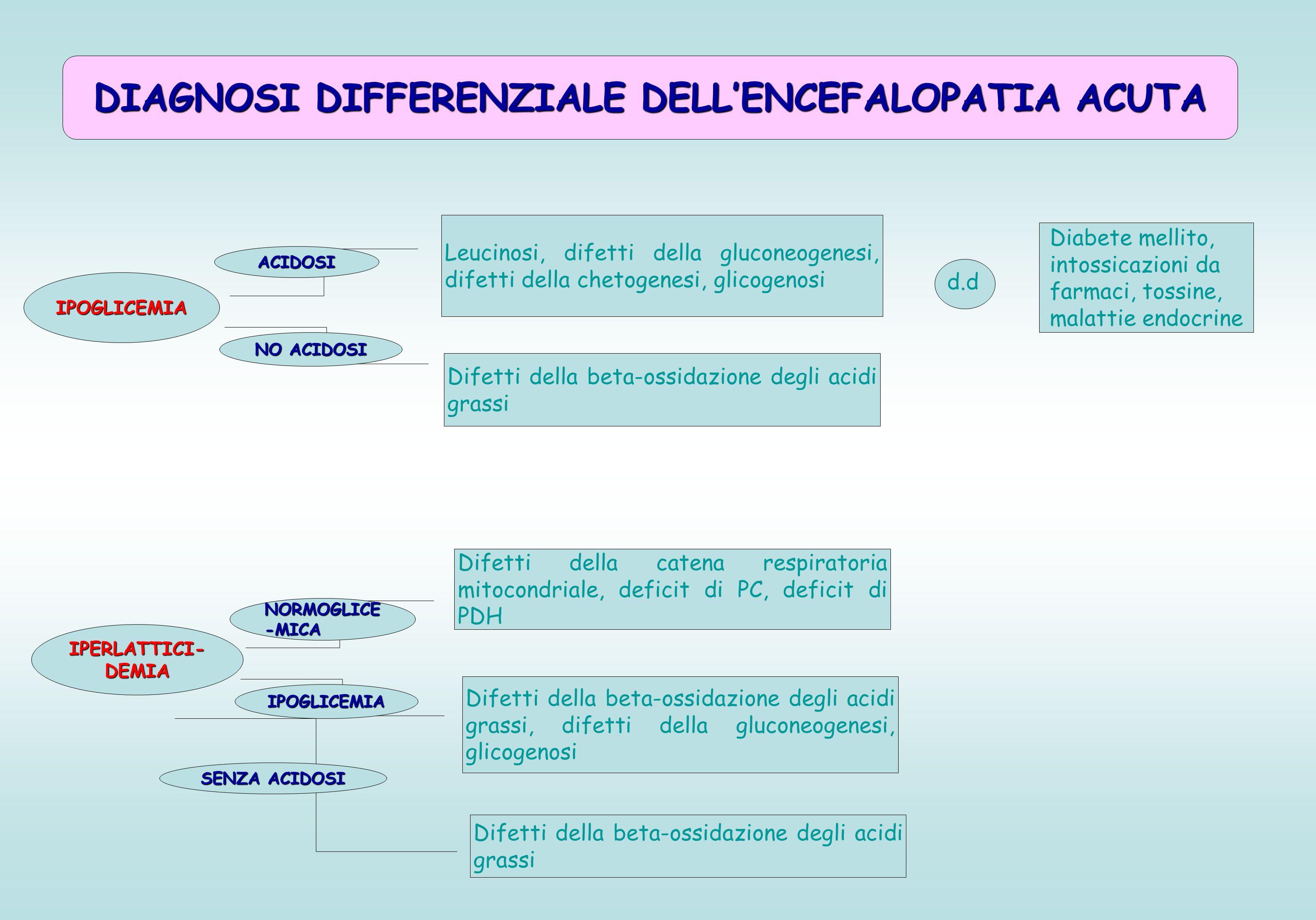 DIAGNOSI DIFFERENZIALE DELL'ENCEFALOPATIA ACUTA IPOGLICEMIA ACIDOSI NO ACIDOSI Leucinosi, difetti della gluconeogenesi, difetti della chetogenesi, glicogenosi Difetti della beta-ossidazione degli acidi grassi d.d Diabete mellito, intossicazioni da farmaci, tossine, malattie endocrine IPERLATTICI- DEMIA NORMOGLICE -MICA IPOGLICEMIA Difetti della catena respiratoria mitocondriale, deficit di PC, deficit di PDH Difetti della beta-ossidazione degli acidi grassi, difetti della gluconeogenesi, glicogenosi SENZA ACIDOSI Difetti della beta-ossidazione degli acidi grassi