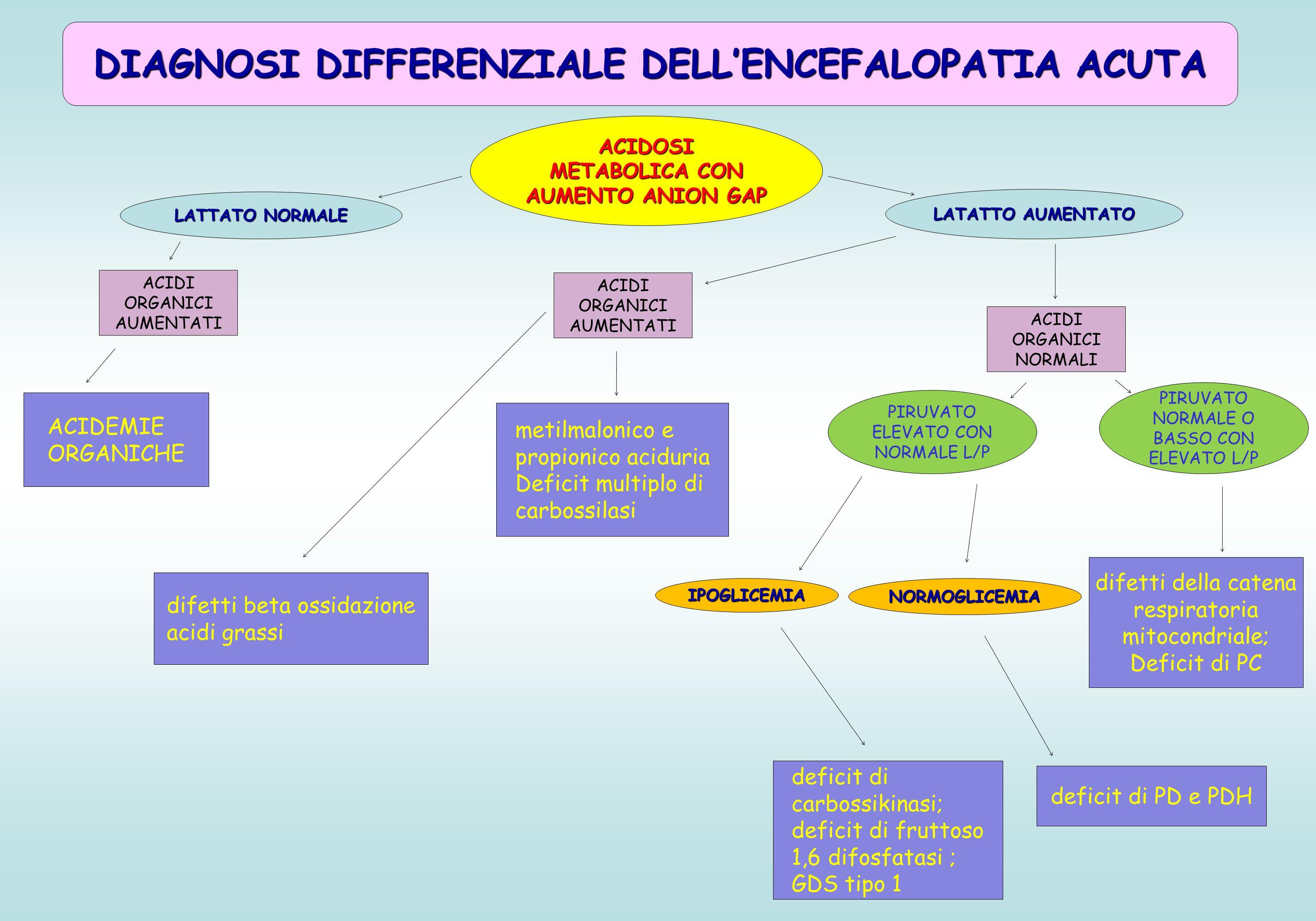 DIAGNOSI DIFFERENZIALE DELL'ENCEFALOPATIA ACUTA ACIDOSI METABOLICA CON AUMENTO ANION GAP PIRUVATO NORMALE O BASSO CON ELEVATO L/P difetti della catena respiratoria mitocondriale; Deficit di PC deficit di PD e PDH deficit di carbossikinasi; deficit di fruttoso 1,6 difosfatasi ; GDS tipo 1 ACIDEMIE ORGANICHE LATTATO NORMALE LATATTO AUMENTATO ACIDI ORGANICI NORMALI NORMOGLICEMIAIPOGLICEMIA ACIDI ORGANICI AUMENTATI PIRUVATO ELEVATO CON NORMALE L/P ACIDI ORGANICI AUMENTATI metilmalonico e propionico aciduria Deficit multiplo di carbossilasi difetti beta ossidazione acidi grassi