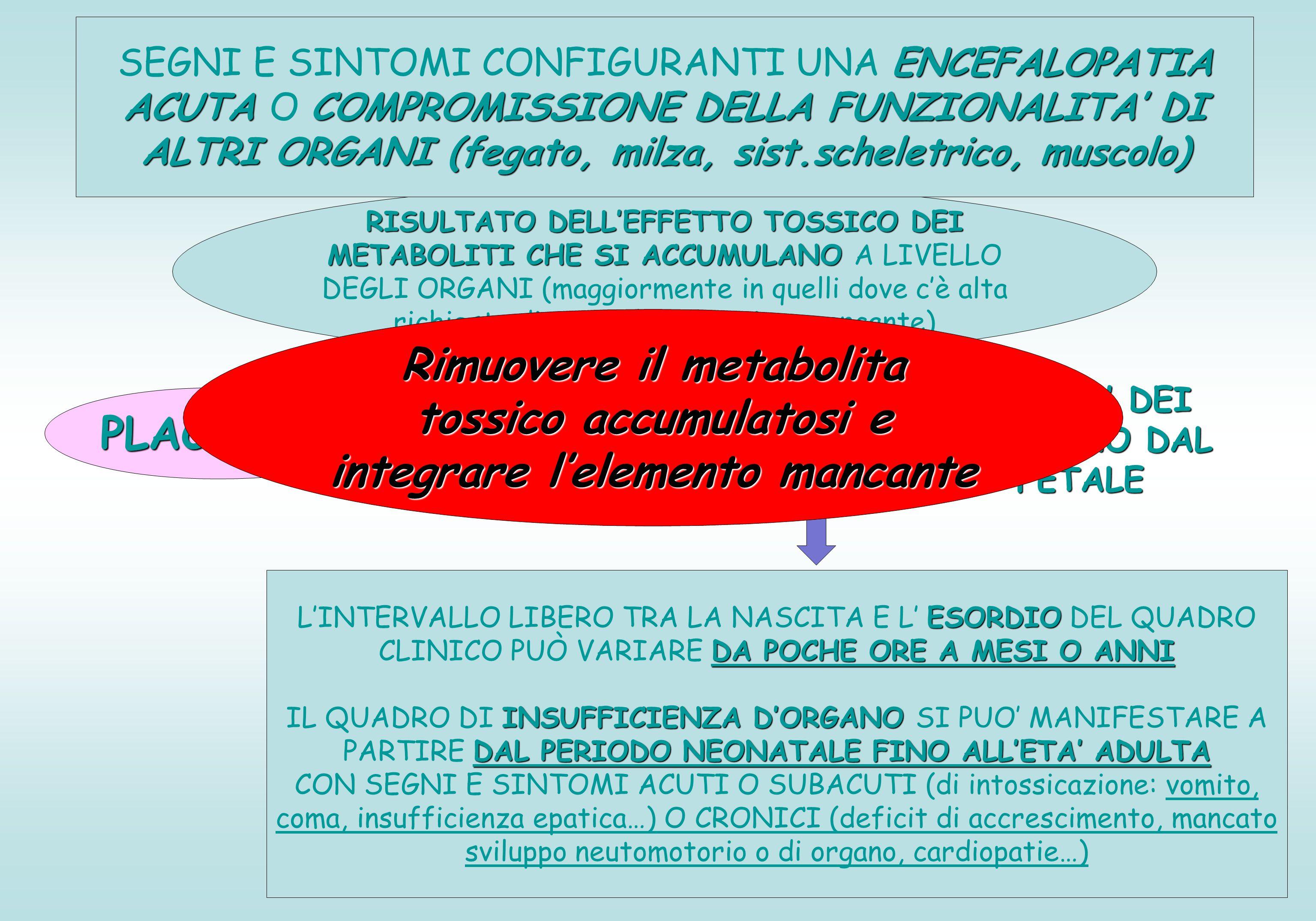 RISULTATO DELL'EFFETTO TOSSICO DEI METABOLITI CHE SI ACCUMULANO RISULTATO DELL'EFFETTO TOSSICO DEI METABOLITI CHE SI ACCUMULANO A LIVELLO DEGLI ORGANI (maggiormente in quelli dove c'è alta richiesta di attività dell'enzima mancante) ENCEFALOPATIA ACUTA COMPROMISSIONE DELLA FUNZIONALITA' DI ALTRI ORGANI (fegato, milza, sist.scheletrico, muscolo) SEGNI E SINTOMI CONFIGURANTI UNA ENCEFALOPATIA ACUTA O COMPROMISSIONE DELLA FUNZIONALITA' DI ALTRI ORGANI (fegato, milza, sist.scheletrico, muscolo) PLACENTA FILTRA LA QUASI TOTALITA' DEI METABOLITI CHE PROVENGONO DAL VERSANTE EMATICO FETALE ESORDIO DA POCHE ORE A MESI O ANNI L'INTERVALLO LIBERO TRA LA NASCITA E L' ESORDIO DEL QUADRO CLINICO PUÒ VARIARE DA POCHE ORE A MESI O ANNI INSUFFICIENZA D'ORGANO DAL PERIODO NEONATALE FINO ALL'ETA' ADULTA IL QUADRO DI INSUFFICIENZA D'ORGANO SI PUO' MANIFESTARE A PARTIRE DAL PERIODO NEONATALE FINO ALL'ETA' ADULTA CON SEGNI E SINTOMI ACUTI O SUBACUTI (di intossicazione: vomito, coma, insufficienza epatica…) O CRONICI (deficit di accrescimento, mancato sviluppo neutomotorio o di organo, cardiopatie…) Rimuovere il metabolita tossico accumulatosi e integrare l'elemento mancante