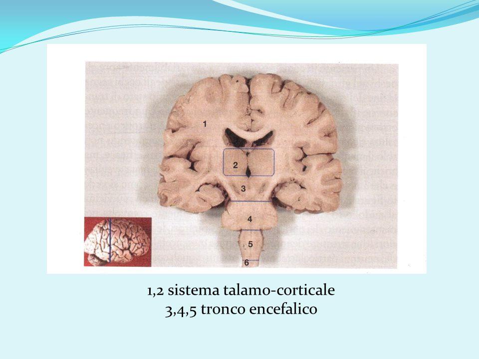 1,2 sistema talamo-corticale 3,4,5 tronco encefalico