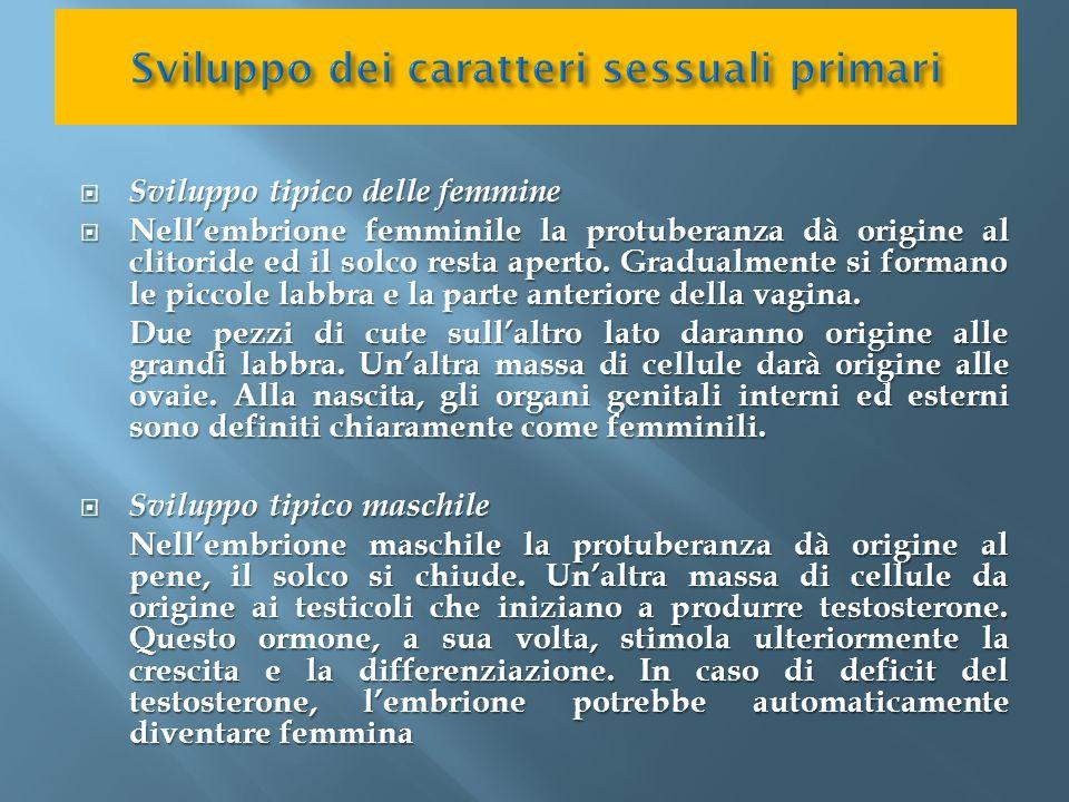  Sviluppo tipico delle femmine  Nell'embrione femminile la protuberanza dà origine al clitoride ed il solco resta aperto. Gradualmente si formano le