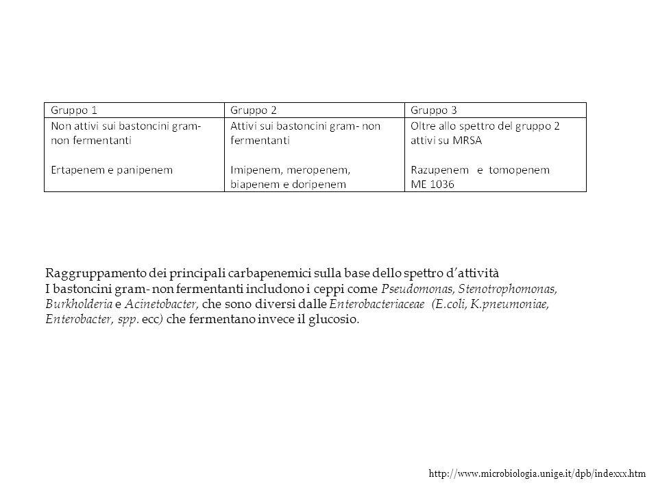http://www.microbiologia.unige.it/dpb/indexxx.htm Raggruppamento dei principali carbapenemici sulla base dello spettro d'attività I bastoncini gram- n