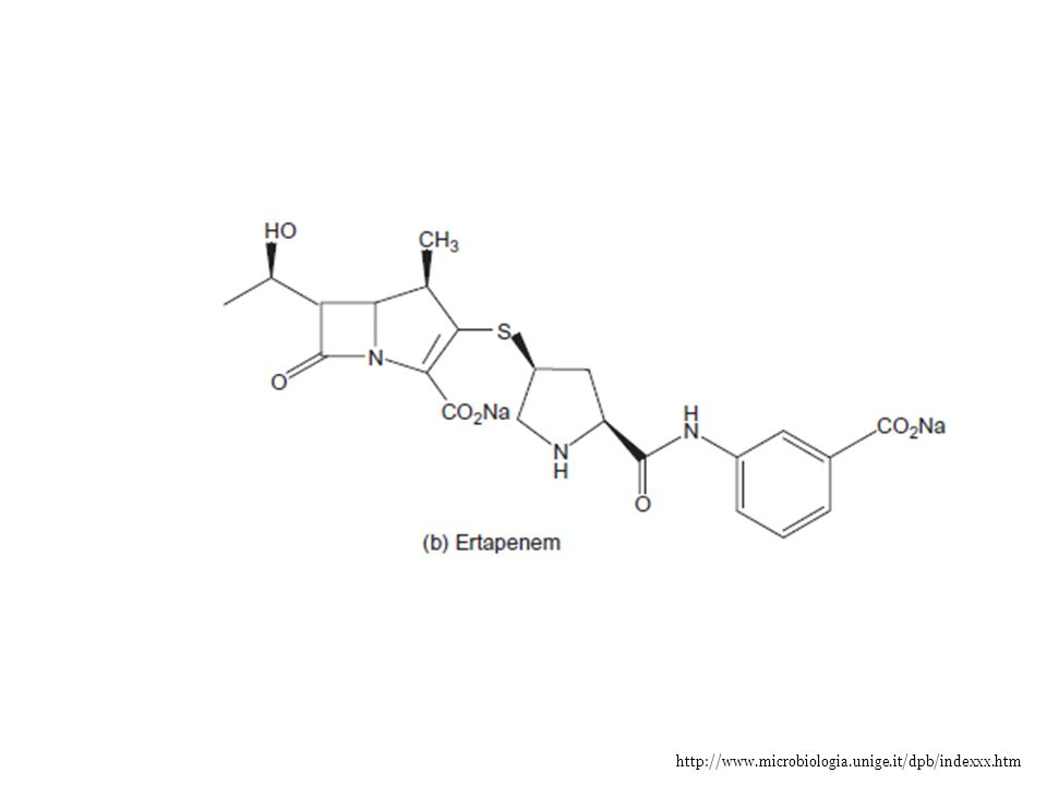 http://www.microbiologia.unige.it/dpb/indexxx.htm