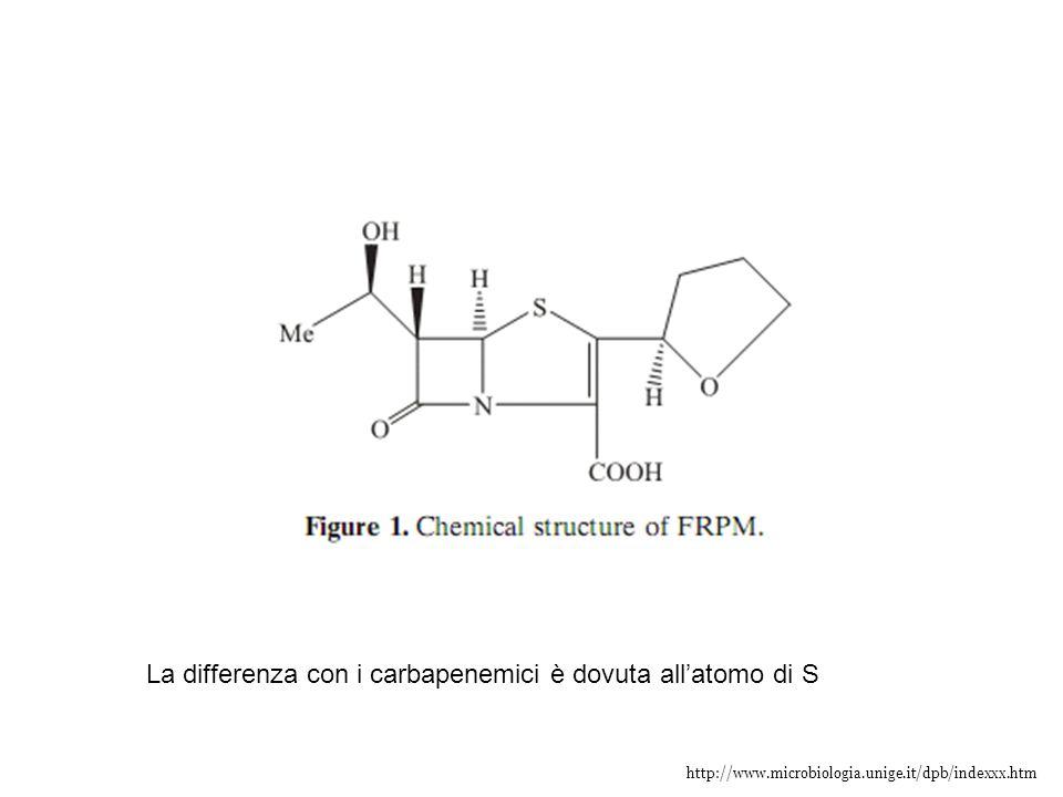 http://www.microbiologia.unige.it/dpb/indexxx.htm La differenza con i carbapenemici è dovuta all'atomo di S