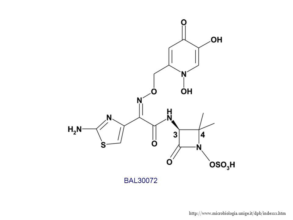 http://www.microbiologia.unige.it/dpb/indexxx.htm BAL30072