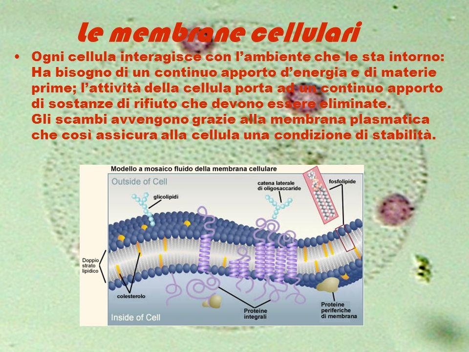 Le membrane cellulari Ogni cellula interagisce con l'ambiente che le sta intorno: Ha bisogno di un continuo apporto d'energia e di materie prime; l'at