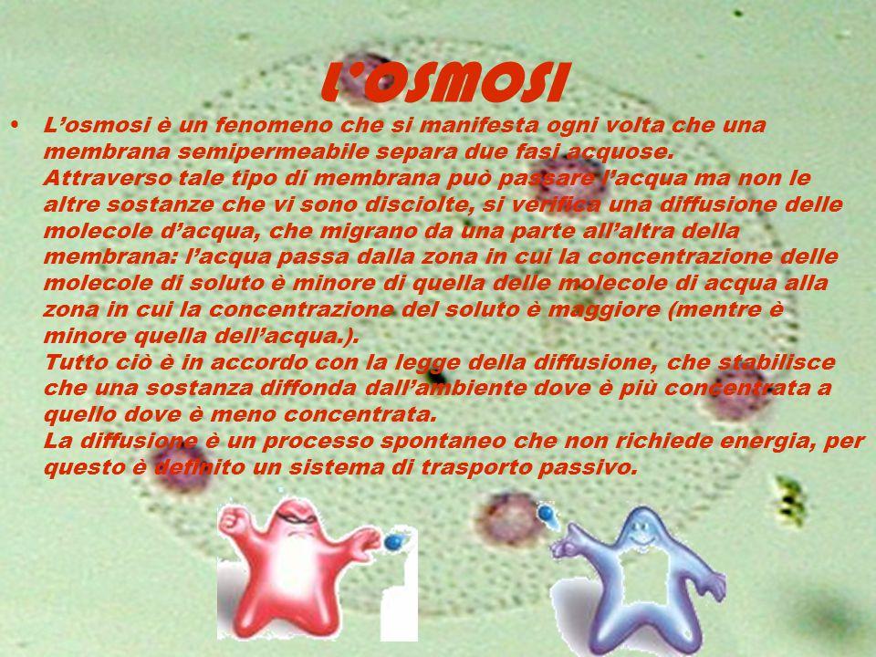 L'OSMOSI L'osmosi è un fenomeno che si manifesta ogni volta che una membrana semipermeabile separa due fasi acquose. Attraverso tale tipo di membrana