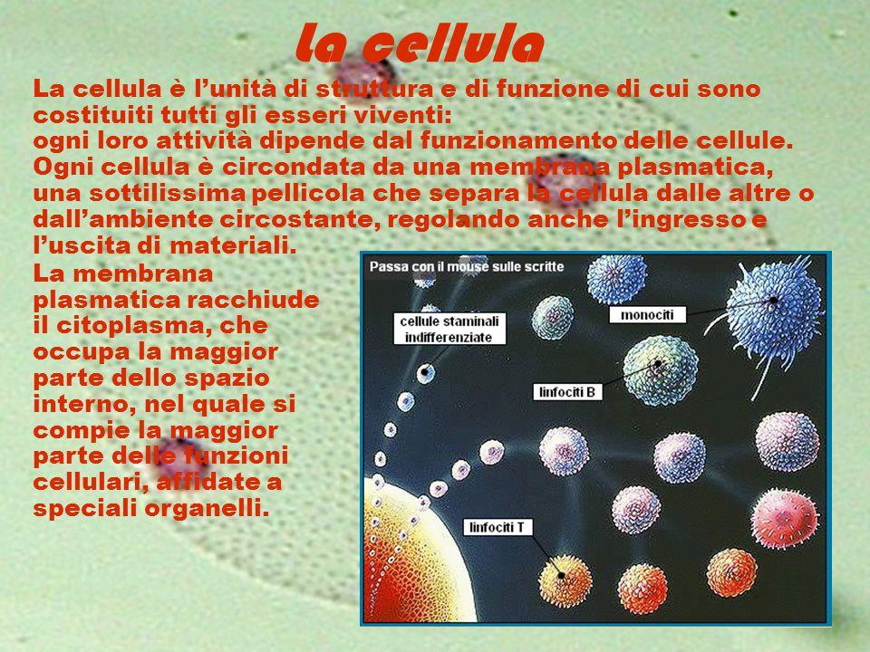 La cellula La cellula è l'unità di struttura e di funzione di cui sono costituiti tutti gli esseri viventi: ogni loro attività dipende dal funzionamen
