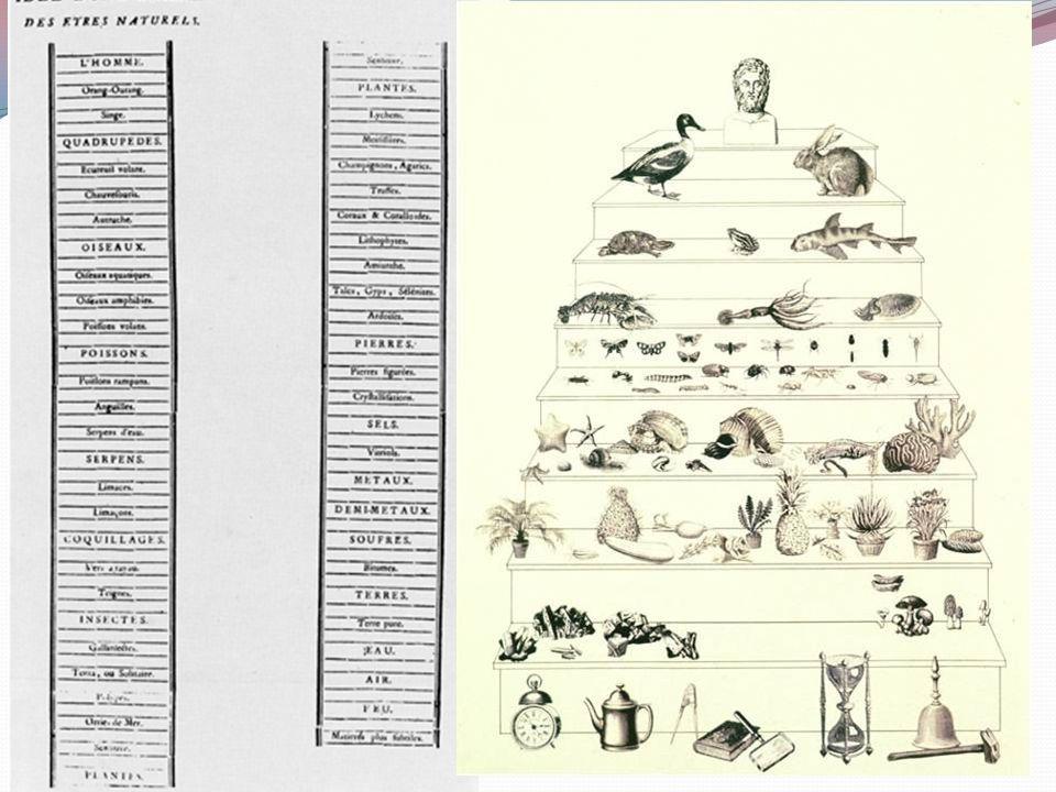 La scala naturae Col termine di Scala Naturae si intende l'ordinamento degli esseri viventi in funzione della loro complessità In basso ci sono gli in