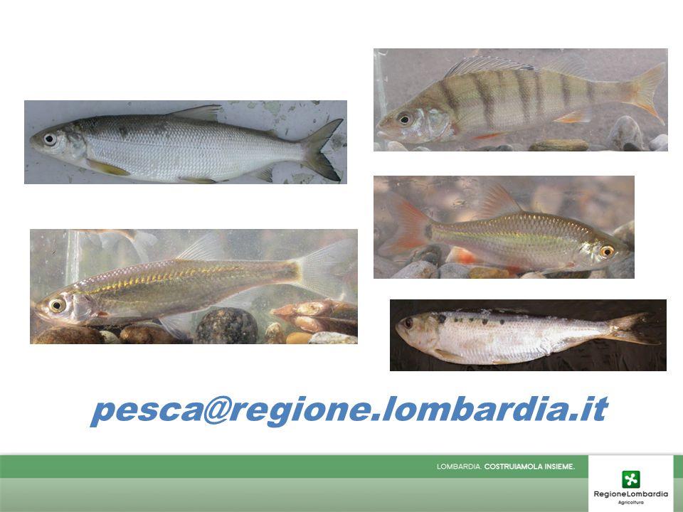 pesca@regione.lombardia.it