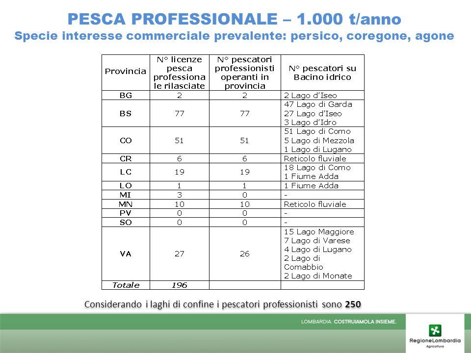 PESCA PROFESSIONALE – 1.000 t/anno Specie interesse commerciale prevalente: persico, coregone, agone Considerando i laghi di confine i pescatori professionisti sono 250