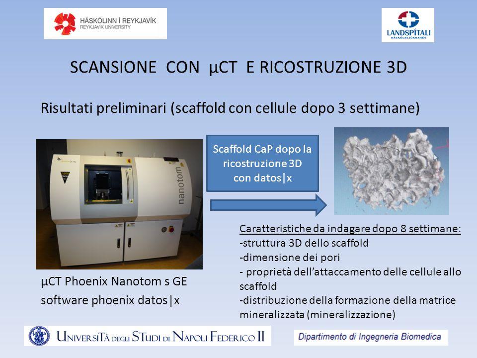 SCANSIONE CON µCT E RICOSTRUZIONE 3D µCT Phoenix Nanotom s GE software phoenix datos|x Scaffold CaP dopo la ricostruzione 3D con datos|x Risultati preliminari (scaffold con cellule dopo 3 settimane) Caratteristiche da indagare dopo 8 settimane: -struttura 3D dello scaffold -dimensione dei pori - proprietà dell'attaccamento delle cellule allo scaffold -distribuzione della formazione della matrice mineralizzata (mineralizzazione)