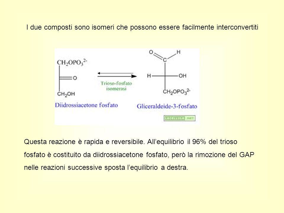 I due composti sono isomeri che possono essere facilmente interconvertiti Questa reazione è rapida e reversibile. All'equilibrio il 96% del trioso fos
