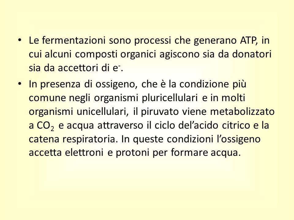 Le fermentazioni sono processi che generano ATP, in cui alcuni composti organici agiscono sia da donatori sia da accettori di e -. In presenza di ossi