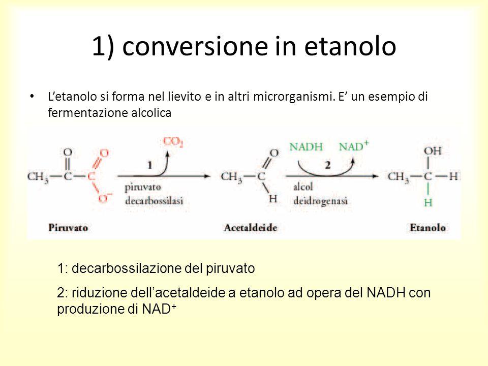1) conversione in etanolo L'etanolo si forma nel lievito e in altri microrganismi. E' un esempio di fermentazione alcolica 1: decarbossilazione del pi