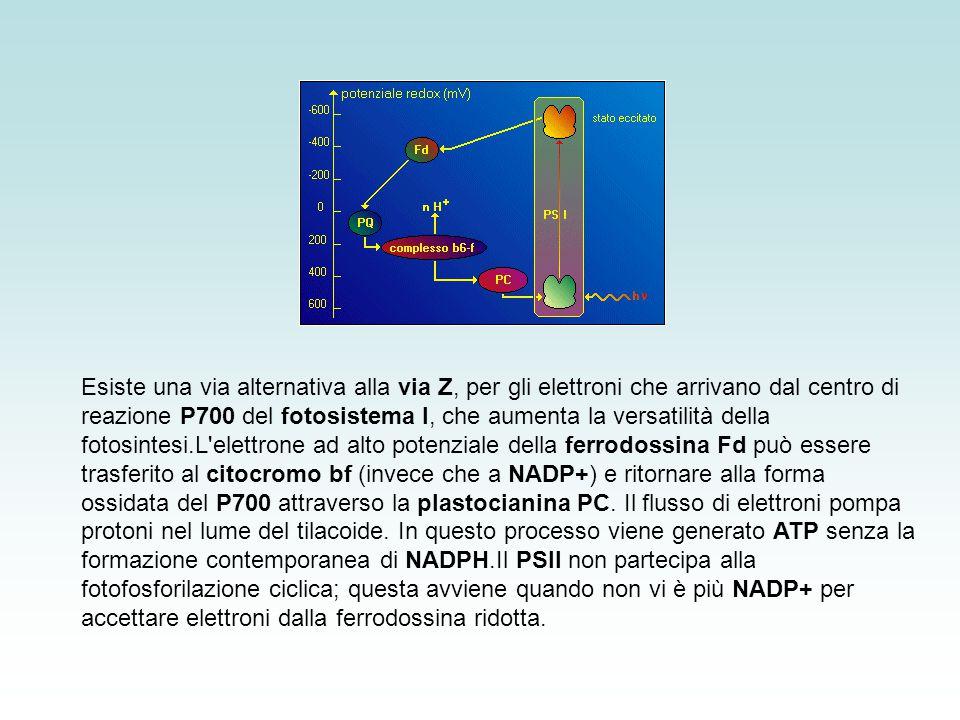 3 esosiofosfati punto di interazione tra le reazioni source e quelle sink