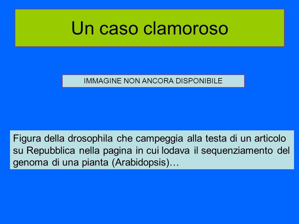 Un caso clamoroso Figura della drosophila che campeggia alla testa di un articolo su Repubblica nella pagina in cui lodava il sequenziamento del genom